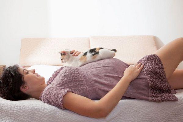 terhesség és macskák_kicsi